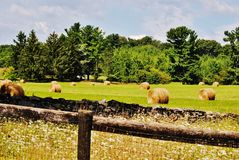 Hay bales in a green field. Round hay bales scattered behind a rock wall Stock Photo