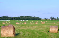 Hay bales. On the green field in summer royalty free stock photography