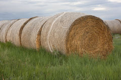 Hay bales and green grass stock images