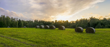 Hay bales on a green grassland Stock Photography