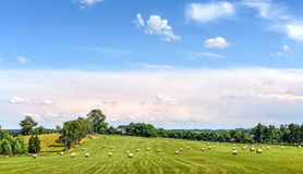 Hay bales in a green grassy field on a Maryland farm in summer Stock Photo