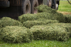 Hay Bales. Bales of hay on the ground near a truck Stock Images
