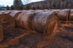 Hay Bales ha impilato su su un campo nella zona rurale Fotografie Stock