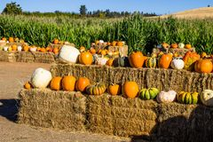 Hay Bales With Pumpkins & Squash For Halloween Royalty Free Stock Photo