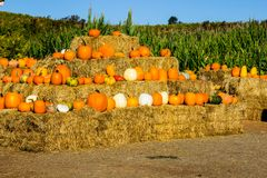 Hay Bales With Squash & Pumpkins For Halloween Stock Images