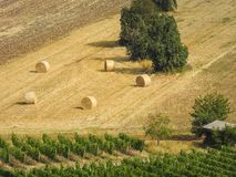 Hay bales before harvest. In late summer stock photo