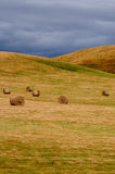 Hay Bales at Harvest Royalty Free Stock Images