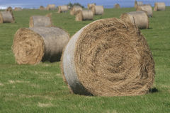 Hay bales at harvest time Royalty Free Stock Photography