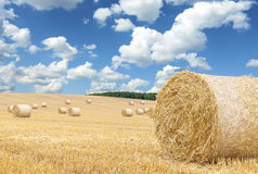 Hay bales on harvested field Stock Image