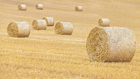 Hay bales on harvested field, Stock Images