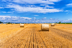 Hay bales on the harvested field. Stock Photo
