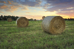 Hay bales in the Hawkesbury fields with a pretty sunrise sky beh Stock Photos