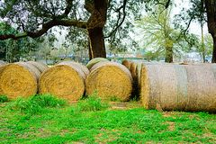 Hay Bales. Under an oak tree at Bayou Lafourche, Louisiana Royalty Free Stock Images
