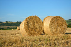 Hay bales - Hay rolls on field Royalty Free Stock Photography