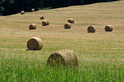 Hay bales in hayfield Stock Image
