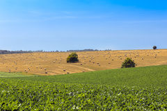 Hay bales on hills Royalty Free Stock Images