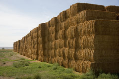 Hay Bales in Huge Stack on Corner of Farmers Field Farm Staple Stock Photos