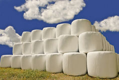 Hay Bales In Plastic Wrap Stock Image