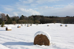 Hay Bales In The Snow Royalty Free Stock Photo