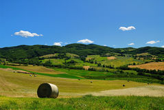 Hay bales in Italian field. A view of round bales of hay in a large, open field in Parma province, Italy Stock Image