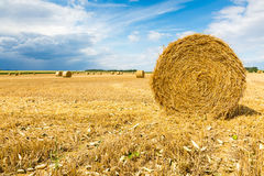 Hay bales. Large view on the wheat field with hay bales Stock Photo