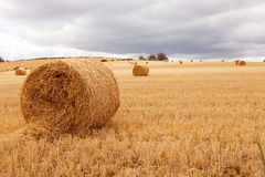 Hay bales laying in field under cloudy skies Royalty Free Stock Image