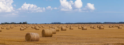 Hay bales in lincolnshire field. Stock Photography