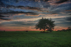 Hay bales and lonely tree on a meadow against beautiful sky with clouds in sunset