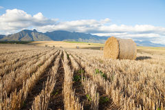 Hay bales lying in a field against mountain backdrop Stock Photo