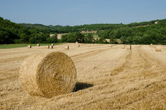 Hay bales lying in a French field. Hay bales in France in the summer Royalty Free Stock Images
