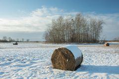 Hay bales lying on a snow-covered field, copse and cloud on a sky. Hay bales lying on a snow-covered field, a copse and a cloud on a blue sky royalty free stock photos
