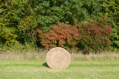 Hay bales in meadow Royalty Free Stock Images