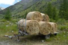 Hay bales in meadow Stock Image