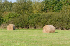 Hay bales in meadow Royalty Free Stock Photos