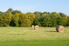 Hay bales in meadow Stock Photography