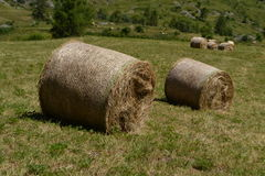 Hay bales in meadow Royalty Free Stock Image