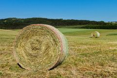 Hay bales on the meadow. Harvesting dried hay. Pushed meadow. Royalty Free Stock Image