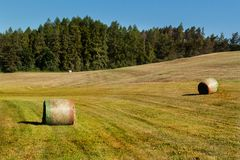 Hay bales on the meadow. Harvesting dried hay. Pushed meadow. Royalty Free Stock Images