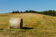 Hay bales on the meadow. Harvesting dried hay. Pushed meadow. Stock Photography