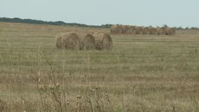 Hay bales in a meadow. Rural field in summer with bales of hay stock footage