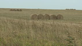 Hay bales in a meadow. Rural field in summer with bales of hay stock video