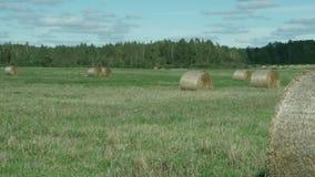 Hay bales in a meadow. Rural field in summer with bales of hay, pan stock video footage