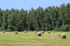 Hay Bales On Meadow Royalty Free Stock Photo