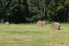 Hay Bales On Meadow Stock Image
