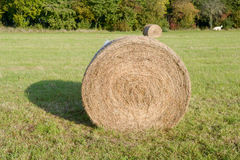 Hay bales in meadow Stock Photo