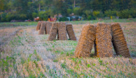 Hay bales in the meadows at sunset with blu sky and clouds, Gubb Royalty Free Stock Photos