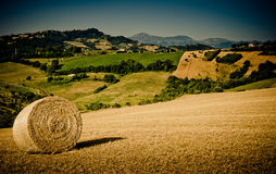 Hay Bales in the morning light Stock Image