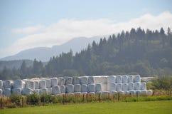 Hay Bales Near Tillamook Plastique-enveloppé, Orégon Photo libre de droits