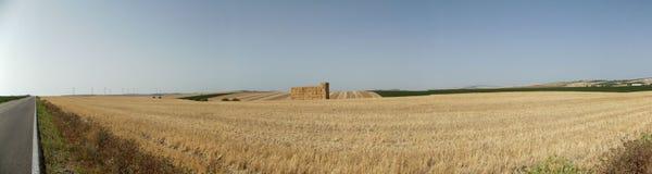 Hay Bales nei campi, provincia di Jerez, Cadice, Spagna Fotografia Stock