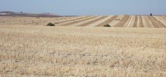 Hay Bales nei campi, provincia di Jerez, Cadice, Spagna Fotografia Stock Libera da Diritti
